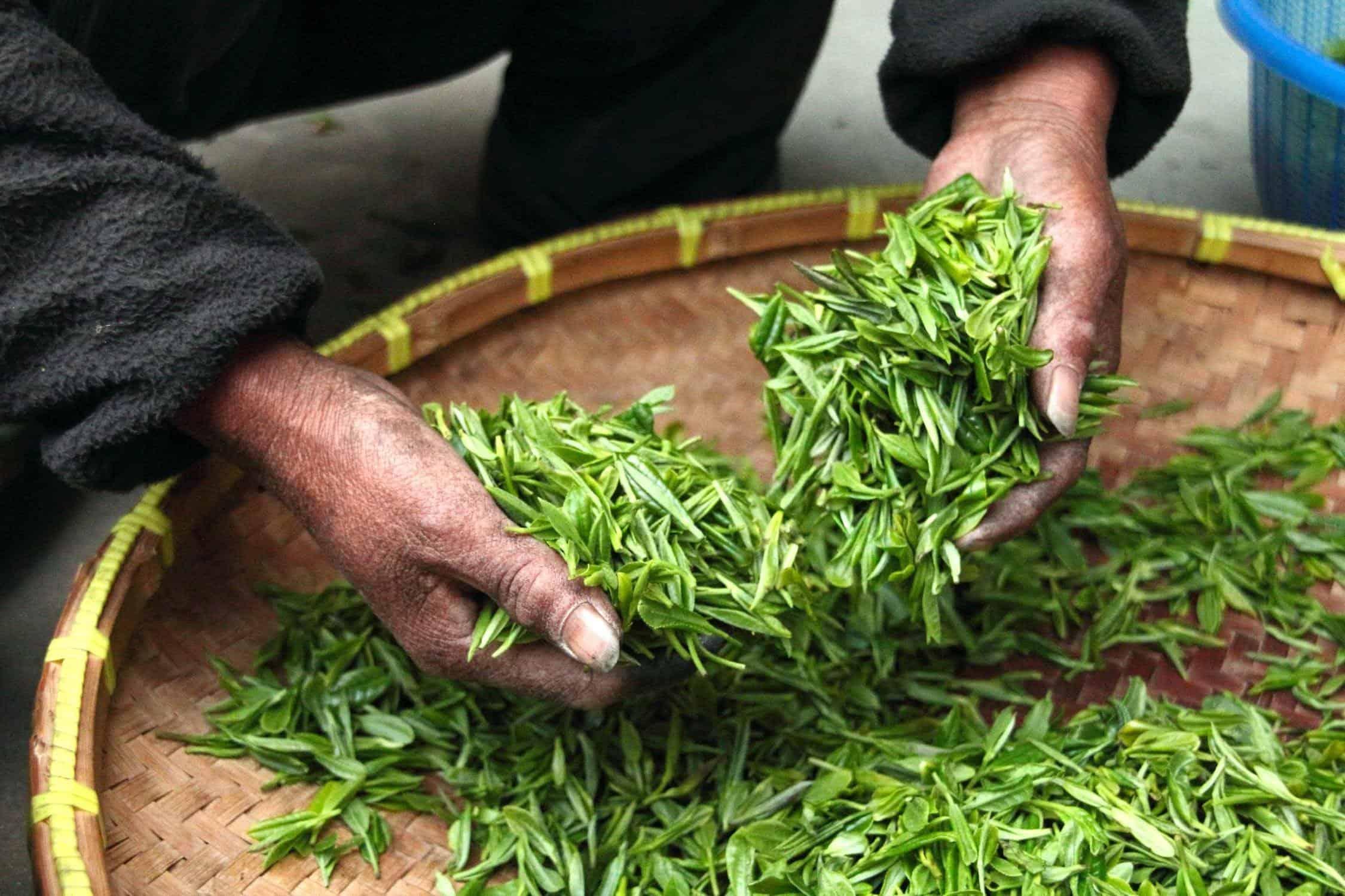 wat is groene thee